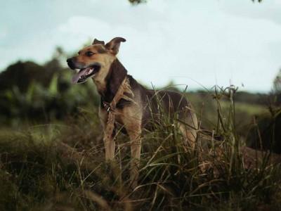 Dog Bit Injury Attorney New Jersey | Jeffrey M. Bloom