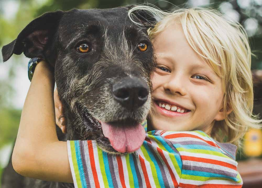 New Jersey Dog Bite Attorney Jeffrey M. Bloom West New York, NJ